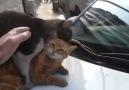 --- KAMU SPOTU --- Kedileri rahatsız etmeyelim