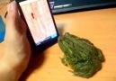 Kandırılan Kurbağanın İntikamı :)