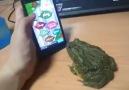 Kandırılan Kurbağanın İntikamı :D