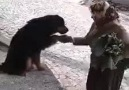Karadeniz insanının hayvan sevgisi :)