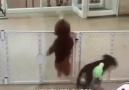 Karadeniz Köpeği :)