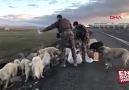 """Kars&Yol kontrolünü yapan Özel... - LAL Hayvanlari Koruma Derneği""""."""
