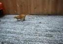 Kar Yağınca Çıldıran Kedi