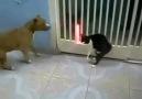 Kavgada köpeği fena dağıtan Süper Kedi