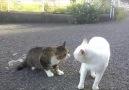 Kavga etmek yerine konuyu medeni bir şekilde tartışan kediler
