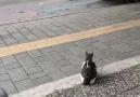 Kayserispor fan - Sorumsuzca sokağa çıkanlardanhayvanlar...
