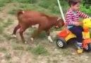 Keçinin yaptığına Bak yaa