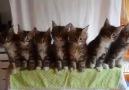 7 Kedi