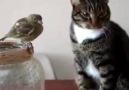 Kedi bile biliyor incitmeden sevmeyi