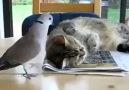 Kedi Büyük ihtimalle Oruç lu :)