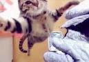 Kedidir Kedi :D