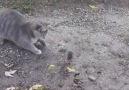 Kedi fare oyunu ve oyunun sonu