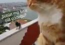 Kedi - Karga Kavgası Yazılar isosyaladam Twitter
