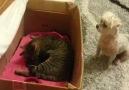 Kedi köpek arkadasligi güzel