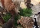 Kedilerin hayvanlar aleminin en tuhaf varlıkları olması