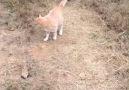 Kedilerin ilginç anları