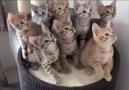 Kedilerin komik halleri.. )