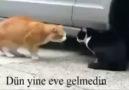 Kedilerin Konuşma Tercümesi