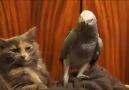 Kedilerin kuşlarla imtihanı