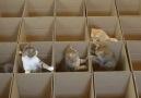 Kedilerin Kutu Eğlencesi..