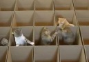 Kedilerin Kutular İle İmtihanı...