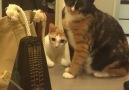 Kedilerin metronom ile imtihanı)))