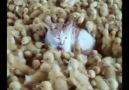 Kedilerin ve kedi severlerin kanalı Kedi TV