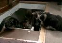 Kediler Nankördür :))