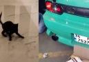 Kediler ve Drift :)