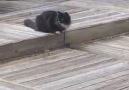 Kediler ve fareler