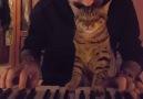 Kediler ve müzik