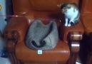 Kediler ve Olta