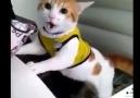 Kedinin gol sevinci hayvan dile geldi )))