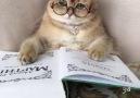 Kedisin sen büyük anne gibi gözlük takıp kitap okumak nedir