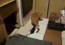 Kedi ve Fare :D