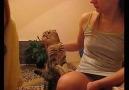 Kedi ve İnsan :)