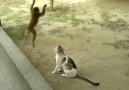 Kedi ve Maymun