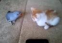 Kedi ve Papağanın Amansız Kavgası..!!