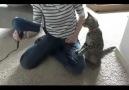 Kedi Ve Saç Kurutma Makinesi