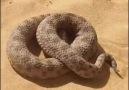 Kedi ve yılan