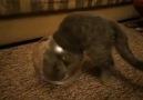 kedi ya işte.. :)