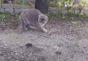 Kediyle Tavuğun Fare Oyunu