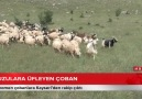 KENT TÜRK - -KUZULARA ÜFLEYEN ÇOBAN (ÖZEL)-Fenomen...