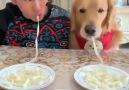 Keyifli bir makarna yeme yarışması İyi... - Köpekler Hakkında Herşey