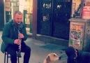 Kıbrıs Şehitlerinde klarnetin sesiyle efkarlanan köpek