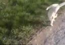 Kim Delirtti Lan Bu Kediyi