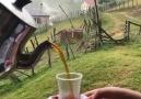 kimler burda çay içmek istiyor )