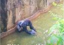 Kim Zolciak Biermann - 4 years old boy fell into gorilla cage Facebook
