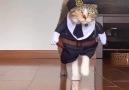 Kip van Troje - Cat-Walk Facebook