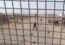 KİRPİ ve KOBRA - Suriye de devriye faaliyeti sırasında...